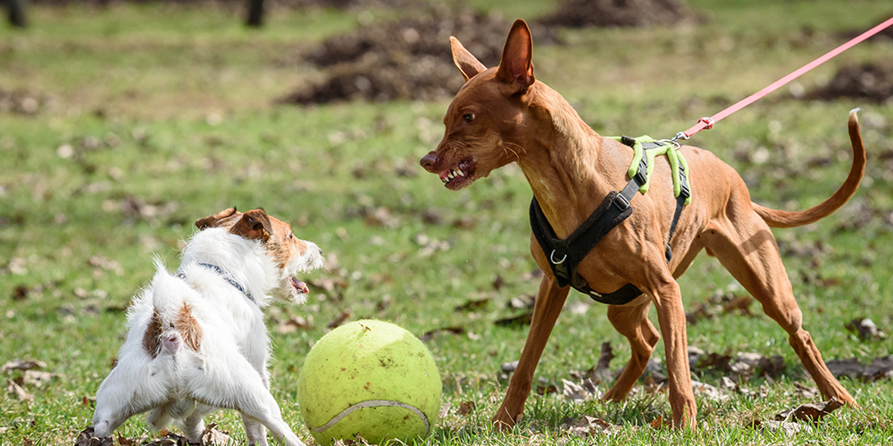 dog training biting and aggression
