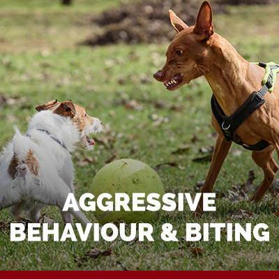 aggression in dogs dog training