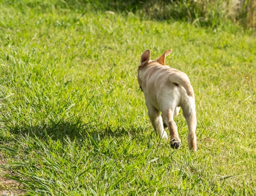 Get your dog to come back – every time!