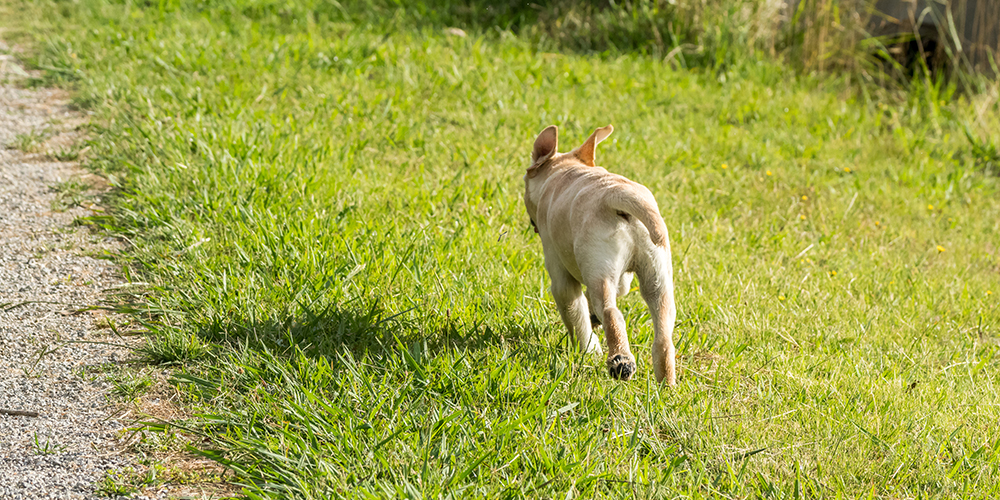 Dog training recall not coming back when called