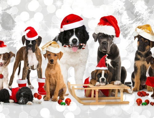 The perfect Christmas gift for dog lovers