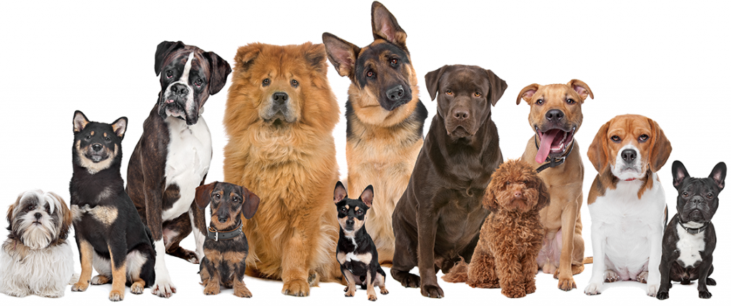 Dog Training Packages - The Dog Man