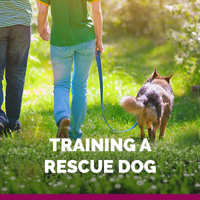how to train a rescue dog