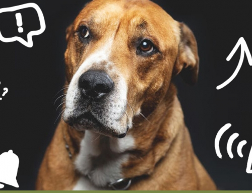 5 Ways to Screw up Your Dog