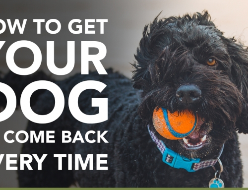 How to get your dog to come back. Every Time!