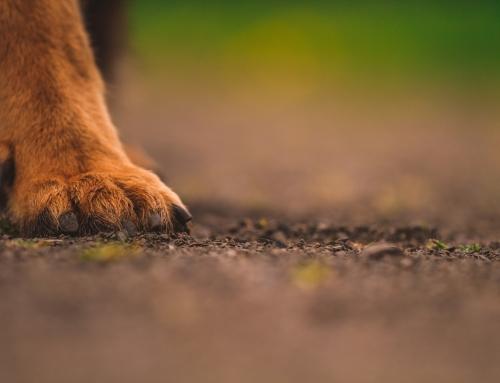 121 dog behaviour training – canine coaching