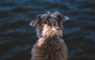 121 dog behaviour training - canine coaching