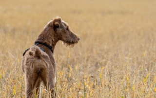 Losing your dog can be a frightening experience