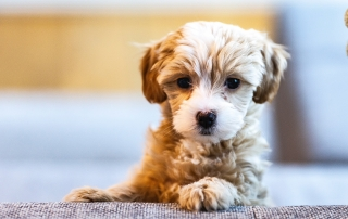 How to tell if your pup is from a puppy farm